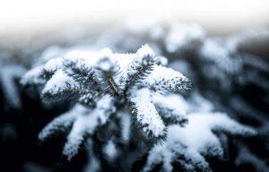 Albero di Natale e neve
