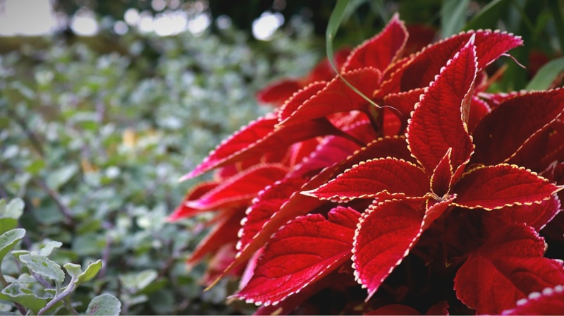 stella di Natale rossa e bianca