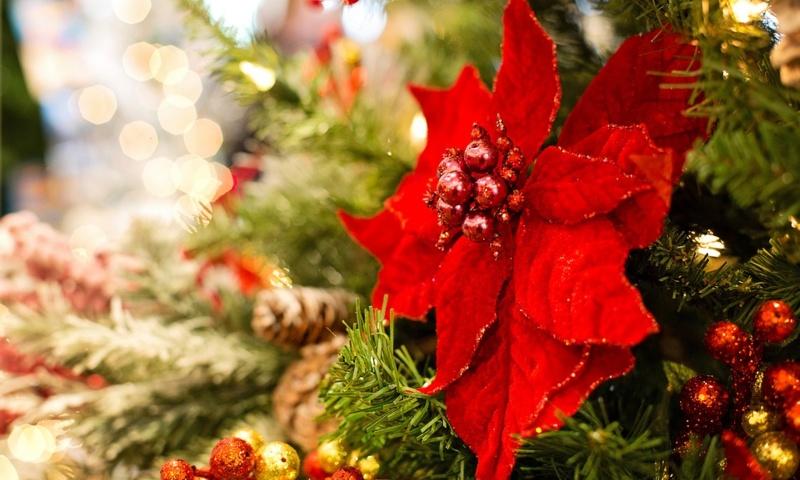 Stella di Natale e albero